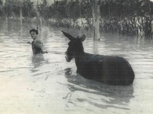 riada y burro